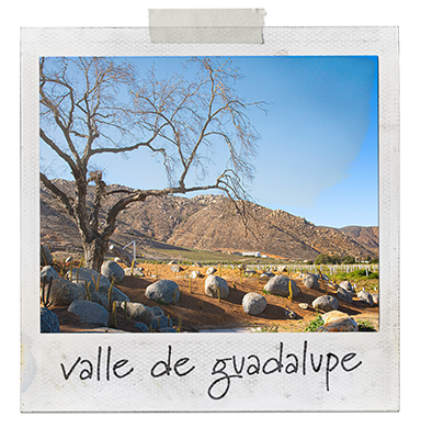 Polaroid picture of Valle de Guadalupe with tape at the top