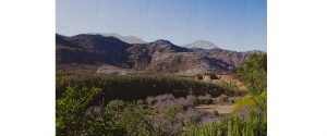 Desert hills landscape with purple flowers in foreground